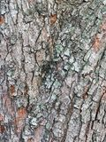 Roughly Textured Bark Pattern stock photography