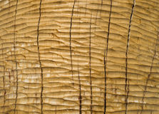 Roughly treated with chisel oak plank closeup Royalty Free Stock Photos