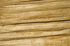 Roughly treated lacquered oak plank closeup Stock Image