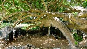 Mtwapa rouins on the beach. Rouins on the beach Mtwata beach  Mombasa Kenya Stock Photography