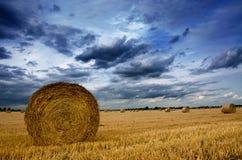 Roulé vers le haut du blé Images libres de droits