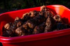 Roulades de viande hachée Grilled sur une grande cuvette rouge La viande cuite dehors sur le barbecue de gril a appelé Mici en cu Images stock
