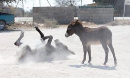 Roulement adulte d'âne dans le sable image stock