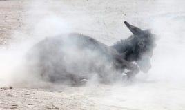 Roulement adulte d'âne dans le sable photographie stock