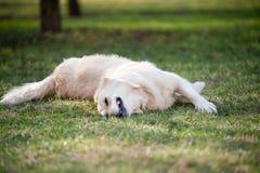 Roulement de chien image stock