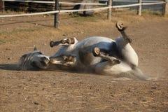 Roulement gentil de cheval image stock