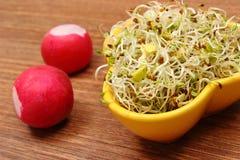 Roulez avec les pousses et le radis de luzerne sur la table en bois Images stock