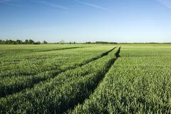 Roulez les voies sur le champ du blé vert Photographie stock