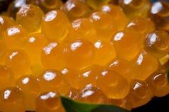 Roulis saumoné d'oeufs de poisson Image stock