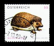 Roumanicus dal petto bianco nordico del Erinaceus dell'istrice, serie della fauna selvatica, circa 2008 Immagine Stock Libera da Diritti
