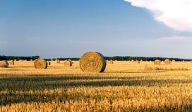Round żółte słoma bele w ciącym polu w letnim dniu Obraz Royalty Free