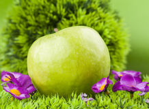 Round apple. Green round apple on green grass Royalty Free Stock Images