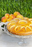 Round apricot cake on cake stand Royalty Free Stock Photography