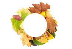 Round autumn frame Stock Photo