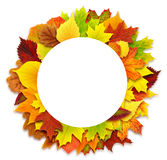 Round autumn leaves border Stock Photography