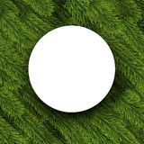 Christmas round background with spruce branches. Stock Images