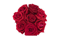 Round background made from red roses. Isolated on white Stock Images