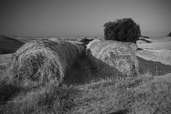 Round bale. Bales in black and white Stock Photo