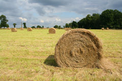 Round bale. Of hay in a filed Stock Photos