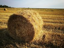 Round bale. Bale, bales, field royalty free stock images