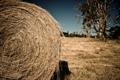 Round bale of harvested hay. For winter feed for livestock in a dry agricultural field with trees Royalty Free Stock Photos