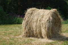 Round bale of hay Stock Photo