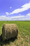 Round bale of hay Royalty Free Stock Photography