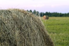 Round bale of hay on a beveled meadow closeup Stock Images