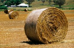 Hay round bale Royalty Free Stock Image