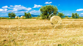 Round bale of hay in a field Royalty Free Stock Photos