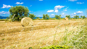 Round bale of hay in a field Stock Photo