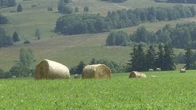 Round bale of hay in a meadow landscape stock footage