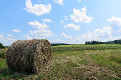 Round bale (hay) on sky background Royalty Free Stock Image