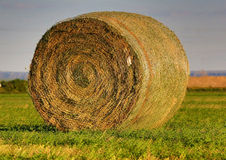 Round bale of hay in Nebraska Royalty Free Stock Image