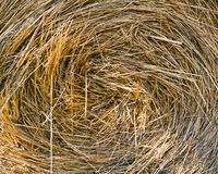 Round bale straw. Close up of the heart of a round straw bale Stock Photos