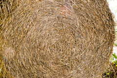 Round bale of straw. Close-up Royalty Free Stock Photos