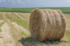 Round bale of straw in the field Royalty Free Stock Photos