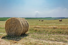 Round bale of straw in the field Stock Image
