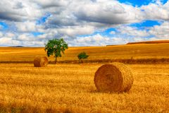 Round bale of straw in the meadow Stock Image