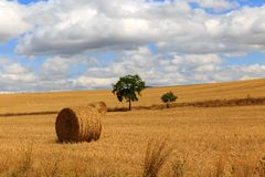 Round bale of straw in the meadow Stock Photography