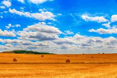 Round bale of straw in the meadow Royalty Free Stock Images