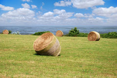 Round bales. On a meadow Stock Photos