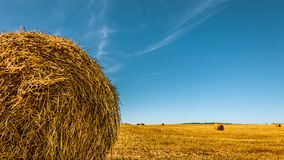Bale of dry golden straw on the left in the foreground. Agricultural field after harvesting cereals under a clear blue sky. Round bales of dry golden straw on stock photo