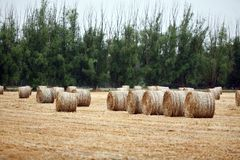 Round Bales of Hay Stock Photos