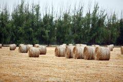 Round Bales of Hay Stock Photos
