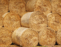 Round Bales of Hay. Stack of circular Bales of Hay Royalty Free Stock Photo