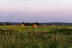 Round bales of hay on a beveled meadow Royalty Free Stock Photography