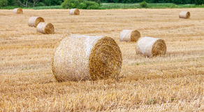 Round bales of hay in the field Stock Photos