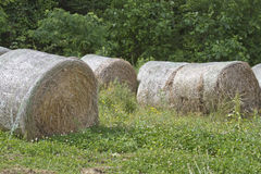 Round Bales of Hay in a Field Stock Image