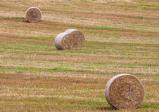Round bales of hay in the field Royalty Free Stock Photos